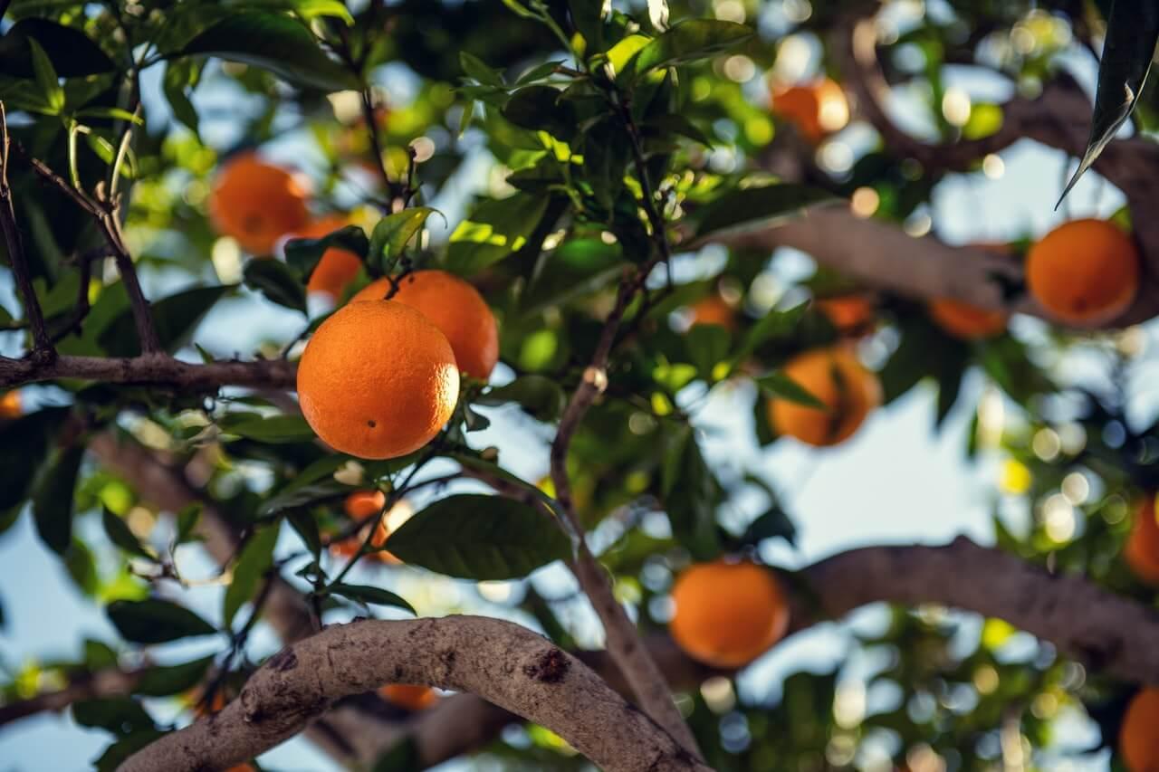 Olejek pomarańczowy - moc w skórce